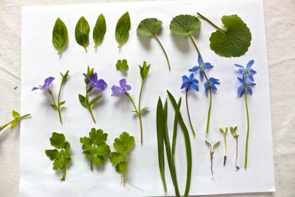 DIY Natural Leaf Prints