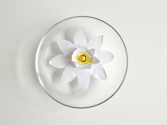 DIY: Magic Water Lilies