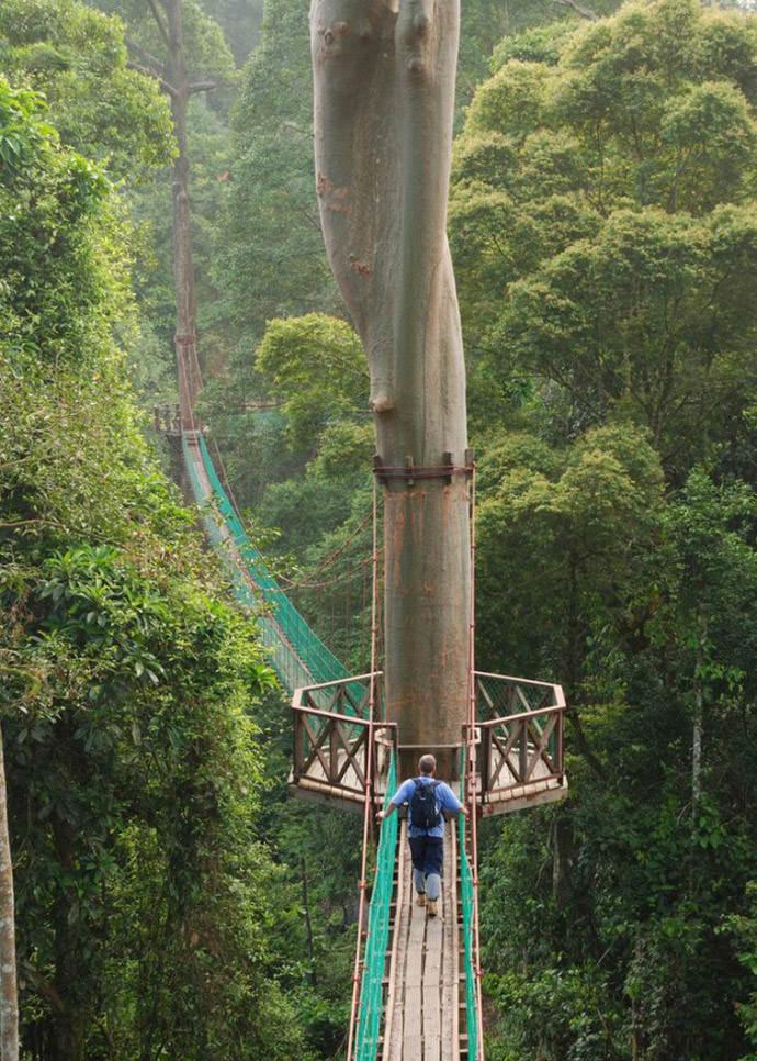 Summer Bucket List: Hike the Borneo Rainforest Canopy Walkway