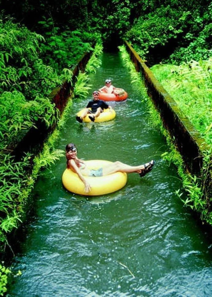 Summer Bucket List - Ride a Hawaiian Sugar Plantation Plume