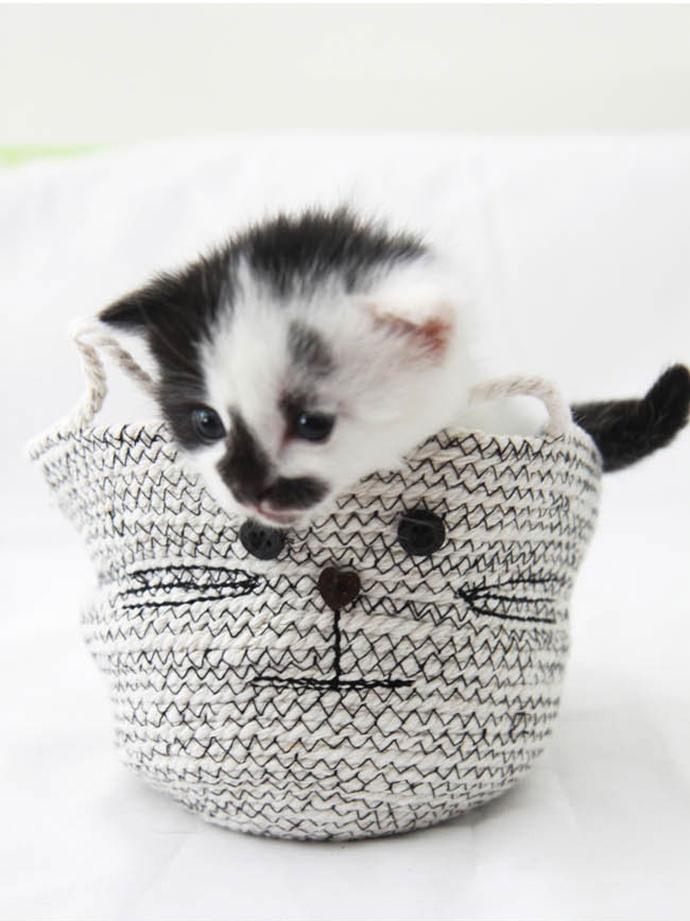 DIY Cat Rope Coil Basket via Hello Natural